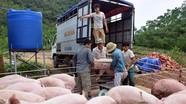 Nghệ An: Giá lợn hơi tăng nhanh, thịt lợn tăng đột biến