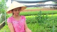 Trồng rau cần khô trong nhà lưới cho thu nhập cao