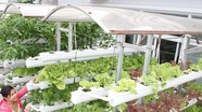 Tuyệt chiêu trồng rau thủy canh cực đơn giản