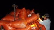 Yên Thành: 'Chạy lụt' nông dân gặt lúa đêm