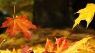 Chuyển đổi thành công lá rụng mùa thu thành vật liệu sản xuất đồ điện tử