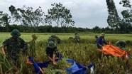 Hơn 200 chiến sỹ giúp dân gặt lúa chạy bão