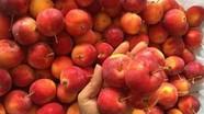 5 loại táo Tàu bán đầy chợ Việt, chị em dễ nhầm lẫn