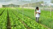 Cách phòng trừ sâu bệnh hại trong sản xuất rau hữu cơ