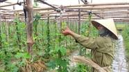 Nghệ An phấn đấu gieo trồng trên 40.600 ha vụ đông