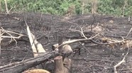 Trưởng Ban tuyên giáo huyện và nhiều cán bộ bị kỷ luật vụ phá rừng, đốt rừng khoanh nuôi