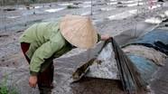 Thành phố Vinh: Nhiều vùng rau bị xóa sổ sau mưa lụt
