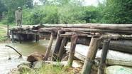 Nguy hiểm rình rập người dân trên cây cầu tạm