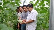 Nghệ An: Doanh nghiệp đầu tư nông nghiệp công nghệ cao được tạo điều kiện tốt nhất