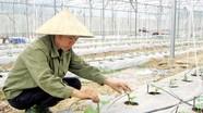Nghệ An: Hướng mở từ làn sóng đầu tư nông nghiệp công nghệ cao