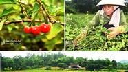 Hiến kế phát triển cây dược liệu miền Tây Nghệ An