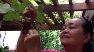 Cuộc sống 'nông dân' viên mãn của bố mẹ đẻ Tăng Thanh Hà