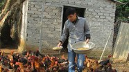 Cử nhân môi trường về quê lập trại nuôi gà