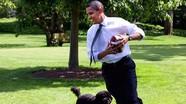 Giảm nguy cơ tim mạch nhờ… nuôi chó