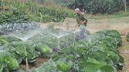 Mô hình rau sạch cho người dân miền núi