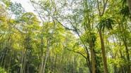 Trăn trở sự nghiệp trồng rừng ở Nghệ An