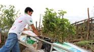 Đồng bào Thái lần đầu tiên trồng ổi ngoại