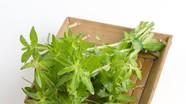 9 loại rau, củ mùa Đông hỗ trợ chữa ho, long đờm hiệu quả