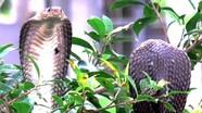Trại rắn độc nhất Việt Nam, thu hút 200.000 lượt khách du lịch mỗi năm