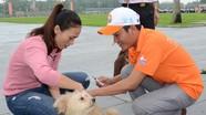 Nghệ An: Người dân nuôi chó phải đăng ký với UBND cấp xã