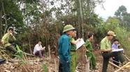 Làm rõ 3 vụ án lớn chặt phá rừng ở Nghệ An