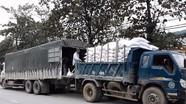 Tiếp nhận và cấp phát hơn 1.000 tấn gạo cho các hộ bảo vệ rừng ở Tương Dương