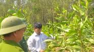 Thực hiện hiệu quả chương trình trồng rừng thay thế