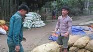 Tư thương 'tranh mua' sắn nguyên liệu của nhà máy sắn ở Con Cuông