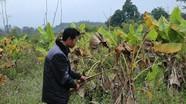 Sự bất hợp lý dẫn đến thất bại các mô hình kinh tế giảm nghèo