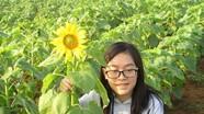 Cánh đồng hoa hướng dương Nghệ An chỉ cao nửa mét