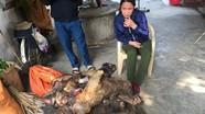 Người phụ nữ bị bắt khi đang chở 7 con khỉ đi tiêu thụ