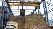 Công ty CP Mía đường Sông Con: Đồng hành phát triển cùng nhà nông