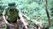 Làm rõ trách nhiệm các đơn vị bảo vệ rừng
