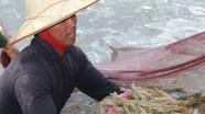 Giá trị nuôi trồng thủy sản ước đạt 2.626 tỷ đồng