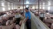 Tân Kỳ:Phong phú thực phẩm sạch phục vụ Tết