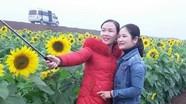 Du khách bắt đầu đổ về cánh đồng hoa hướng dương ở Nghệ An