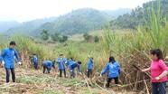 Các đoàn thiện nguyện trao quà Tết và giúp dân thu hoạch mía