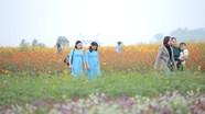 Sức hút 'miền hoa' ở Nghệ An với du khách dịp cuối năm