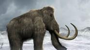 Voi ma mút thời tiền sử sắp hồi sinh trong 'Công viên kỷ Jura' ở Nga