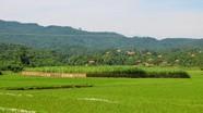 Người dân thị xã Thái Hòa bức xúc vì có đất nhưng không thể vay vốn ngân hàng