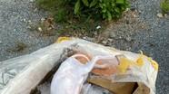 Bắt giữ 630 kg sản phẩm động vật bốc mùi hôi vận chuyển qua Nghệ An