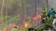 Nghệ An: 2 ngày xảy ra 4 vụ cháy rừng, thiệt hại gần 20 ha