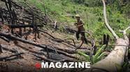 Không nương nhẹ sai phạm trong vụ phá rừng ở Quỳ Châu