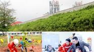 Tuổi trẻ Công ty CP Xi măng Sông Lam góp sức 'Vì một Việt Nam xanh'