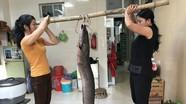 Những con cá lệch 'khủng' bắt được trên sông ở Nghệ An mùa mưa lũ