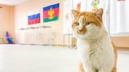 Mèo Mostik giám sát việc chuẩn bị điểm bỏ phiếu bầu cử trên cầu Crưm (Nga)