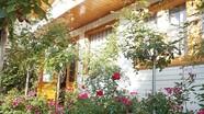 Gia đình gốc Nghệ sống trong nhà gỗ giữa vườn hồng 1.000 m2