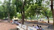 Chỉ đạo các trường học ở Nghệ An xử lý cây xanh bị nghiêng, mối mọt