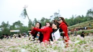 Nghệ An sẽ có tour 2 ngày 1 đêm khám phá thung lũng hoa tam giác mạch