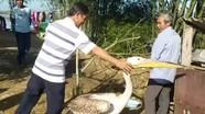 Người dân bắt được 2 con chim lạ lông đổi màu theo mùa, sải cánh dài 1,2m